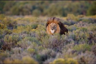 It Ain't No Fun When the Lion Has the Gun: Black Males and Big Game Hunting